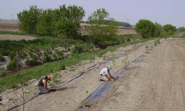 Plantations en bandes riveraines.