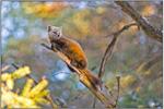 Le répertoire sur la biodiversité et les espèces en danger